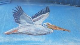 Cocoa Beach Pelican