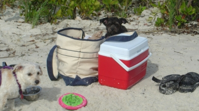 Dog Beach gear