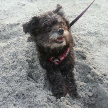 Ella digs the beach