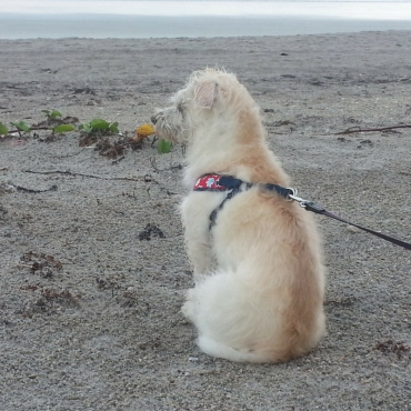 Emma is checking out the waves