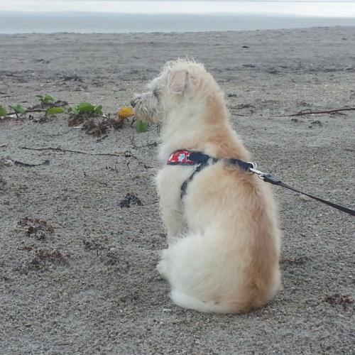 Emma checking waves