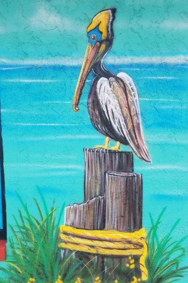 Pelican Jennas Breezeway Cocoa Beach Insider