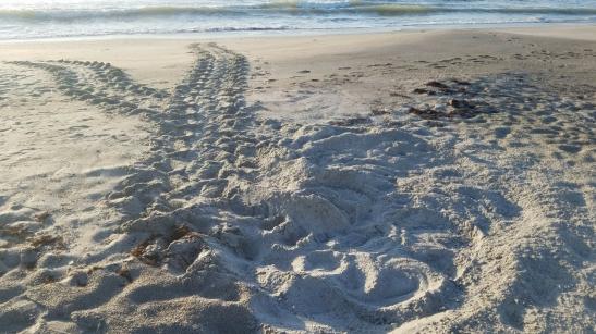 turtle tracks 1