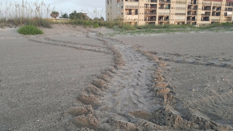 turtle tracks 3