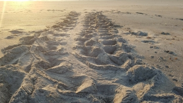 turtle tracks 4
