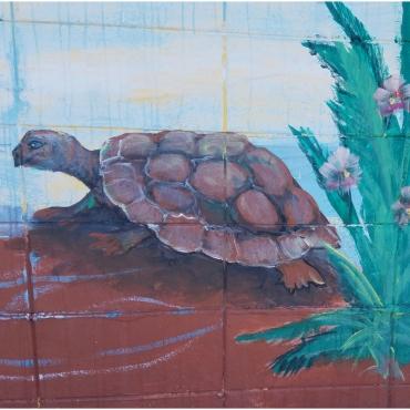 Turtle Cocoa Beach Insider