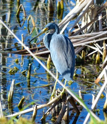 Viera Wetlands _10.28.2018_02