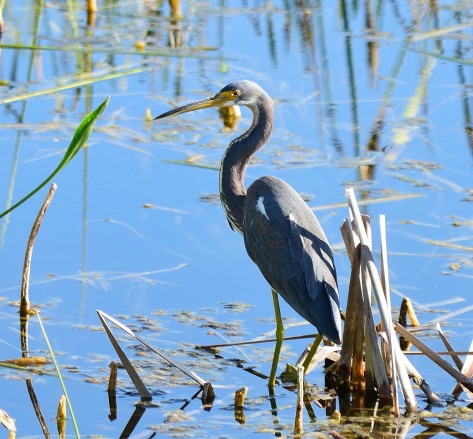 Viera Wetlands _10.28.2018_05