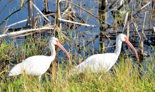 Viera Wetlands _10.28.2018_08