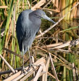 Viera Wetlands _10.28.2018_13