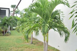 There are a variety of palms throughout property