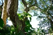 Love the shade trees