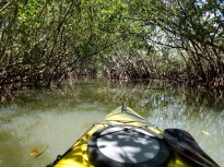 The mangrove tunnels were amazing