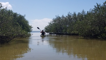 Exploring the mangroves south of 528