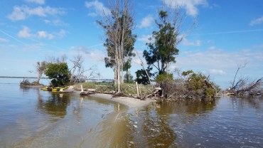One of the many islands north of 528 on the Banana River