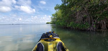 Skirting the mangrove islands